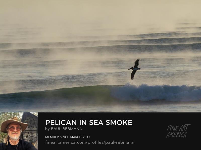 Purchase Pelican In Sea Smoke by Paul Rebmann