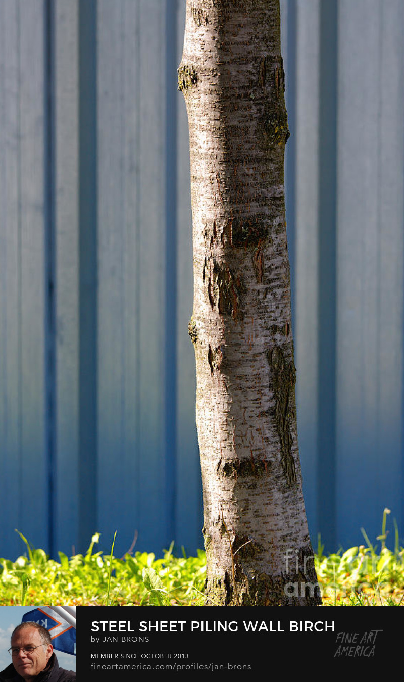 Steel sheet piling wall birch tree - Art Prints