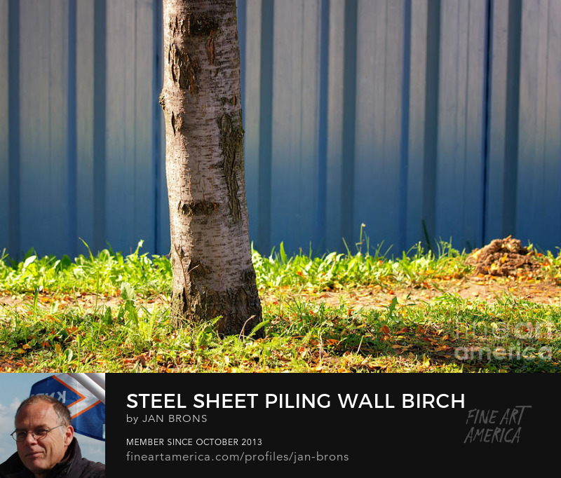 Steel sheet piling wall birch tree grass - Art Prints
