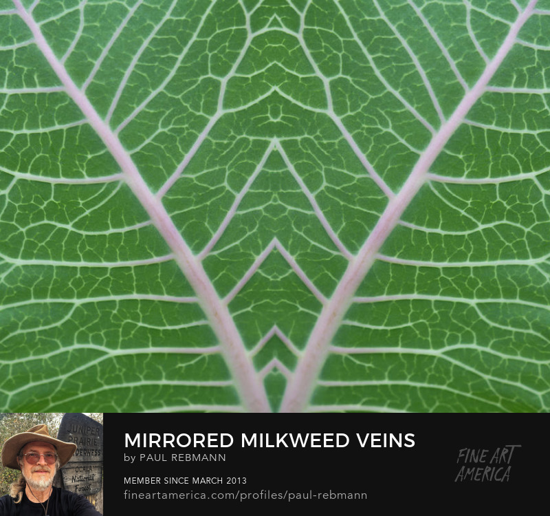 View online purchase options for Mirrored Milkweed Veins by Paul Rebmann