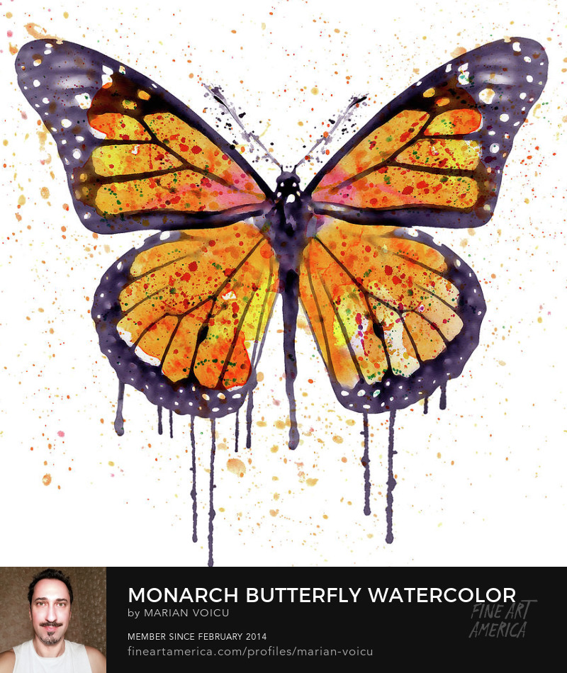 Watercolor painting of a beautiful Monarch butterfly Art for sale
