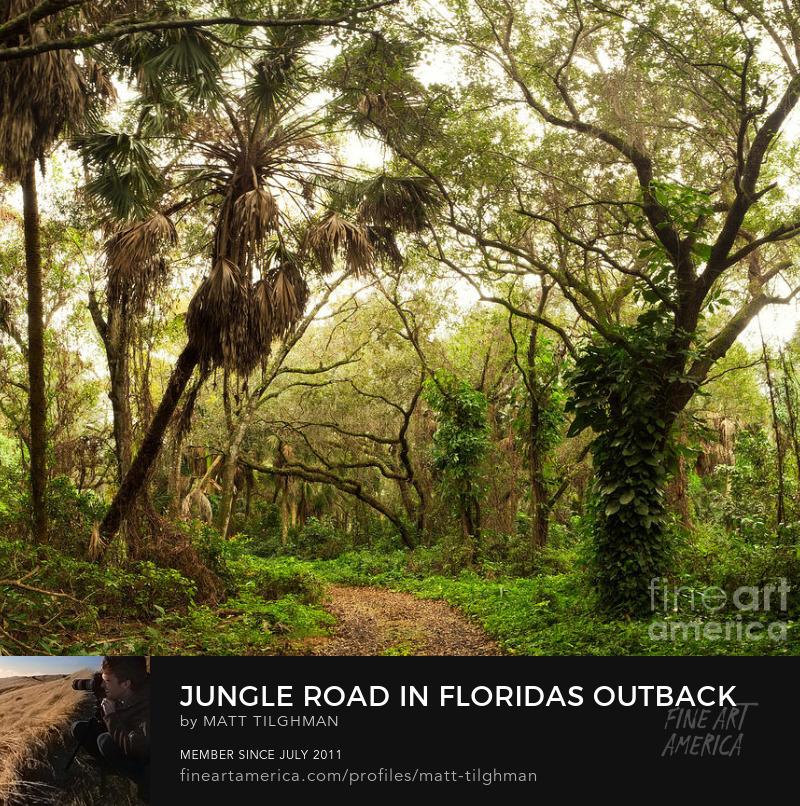 Jungle Road Art Prints