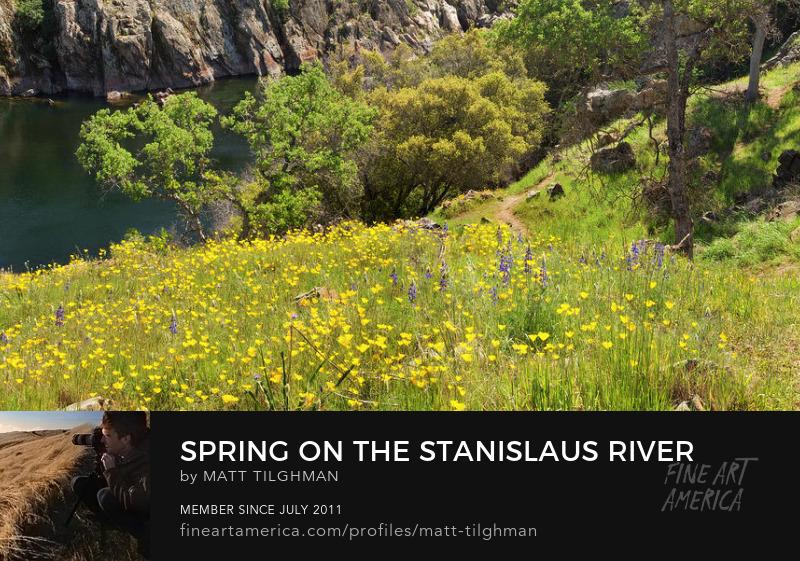 Spring Meadows Art Online