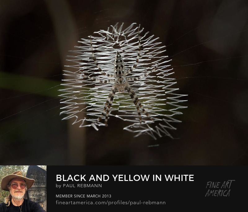 View online purchase options for Black and Yellow in White and Black by Paul Rebmann