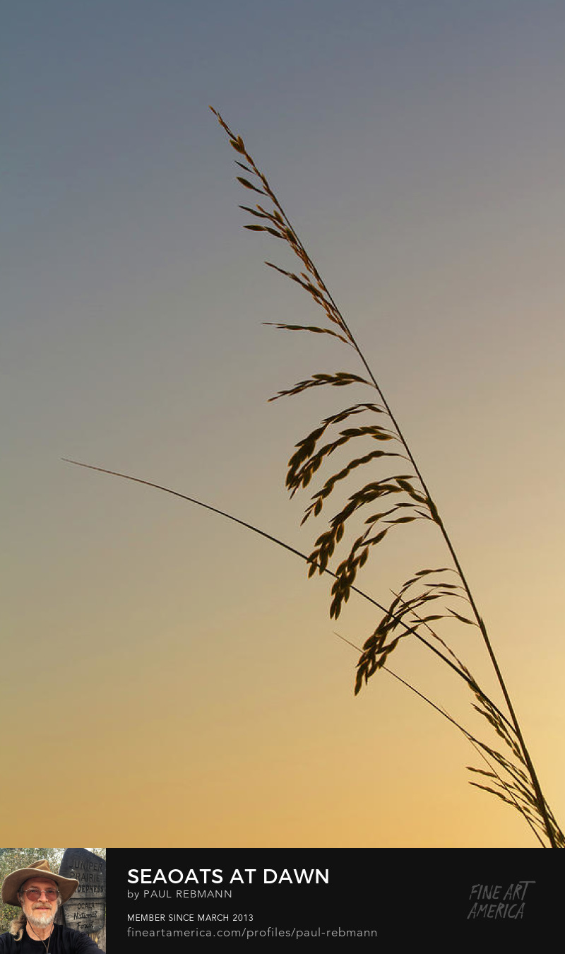 View online purchase options for Seaoats at Dawn by Paul Rebmann