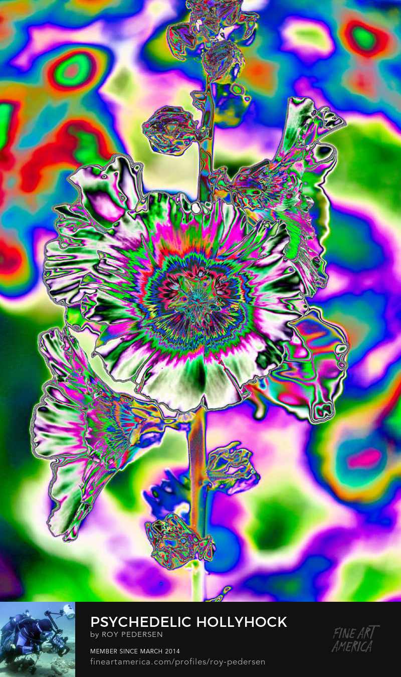 Psychedelic Hollyhock by Roy Pedersen