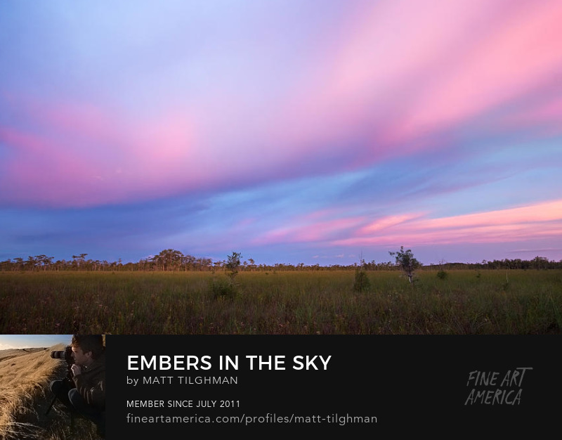 Big Cypress Art Prints