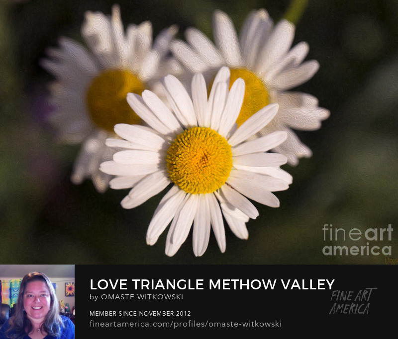 Love Triangle Methow Valley Flowers By Omashte Photography Prints