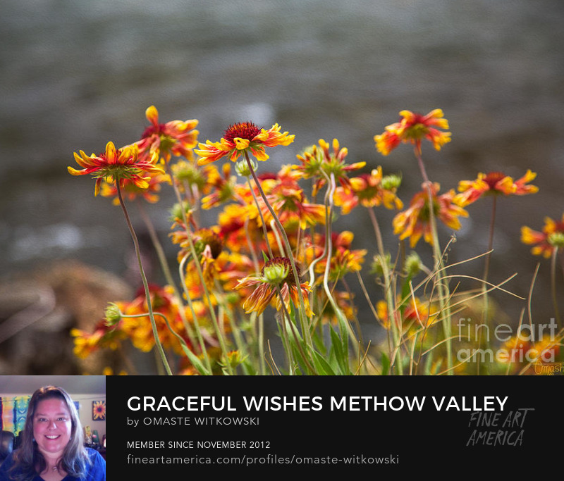 Graceful Wishes Methow Valley Flowers By Omashte
