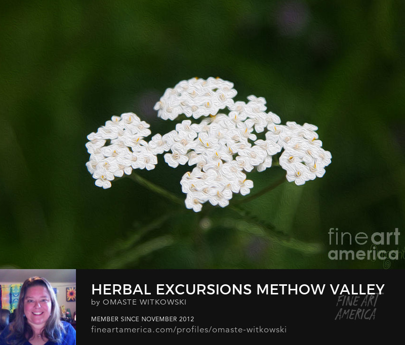 Herbal Excursions Methow Valley Flowers By Omashte Art Prints