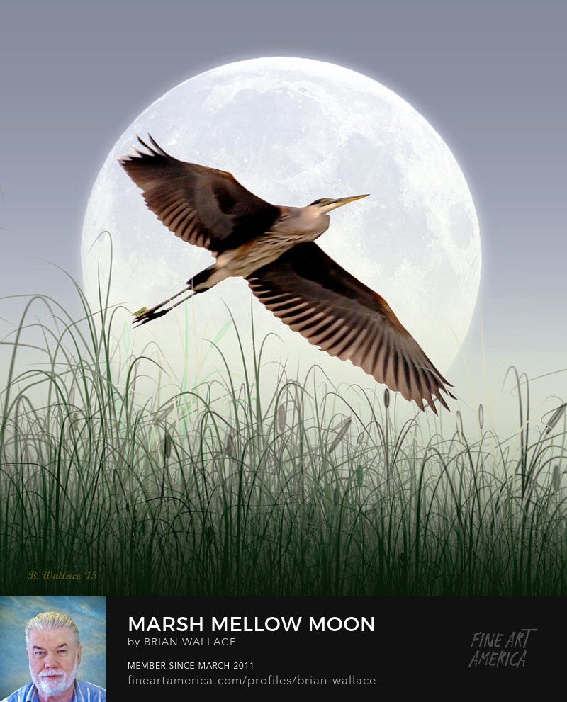 Marsh Mellow Moon by Brian Wallace