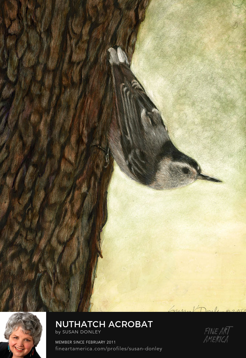 Buy a fine art print of this nuthatch painting