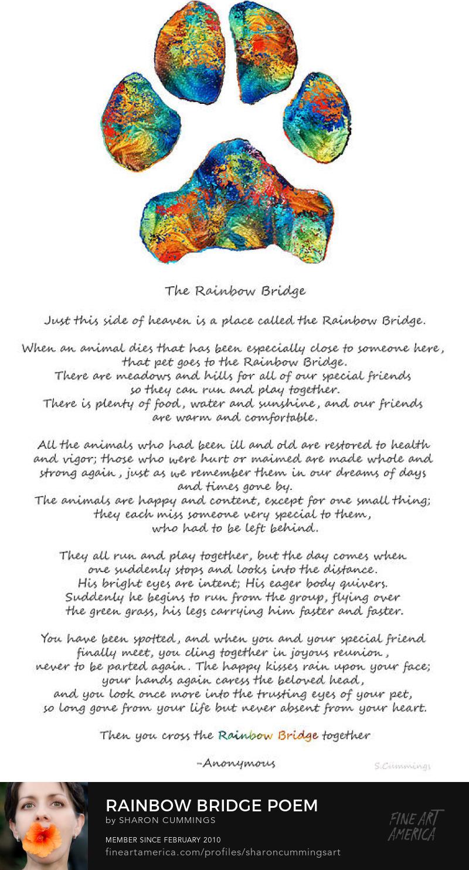 Rainbow Bridge Dog