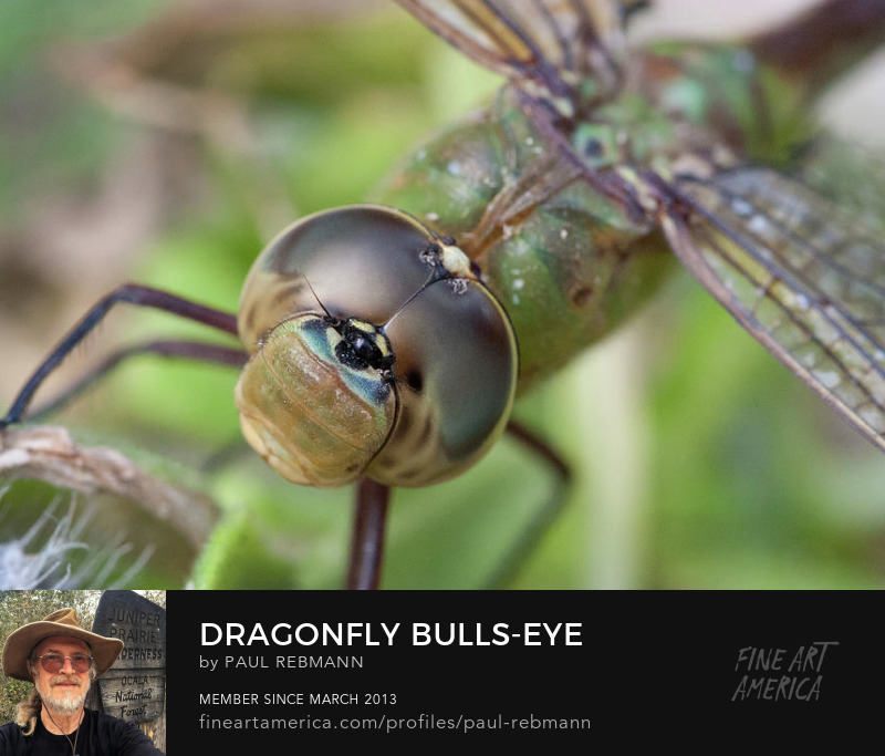 View online purchase options for Dragonfly Bull's-eye by Paul Rebmann