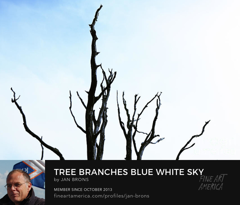 Tree branches blue white sky - Sell Art Online