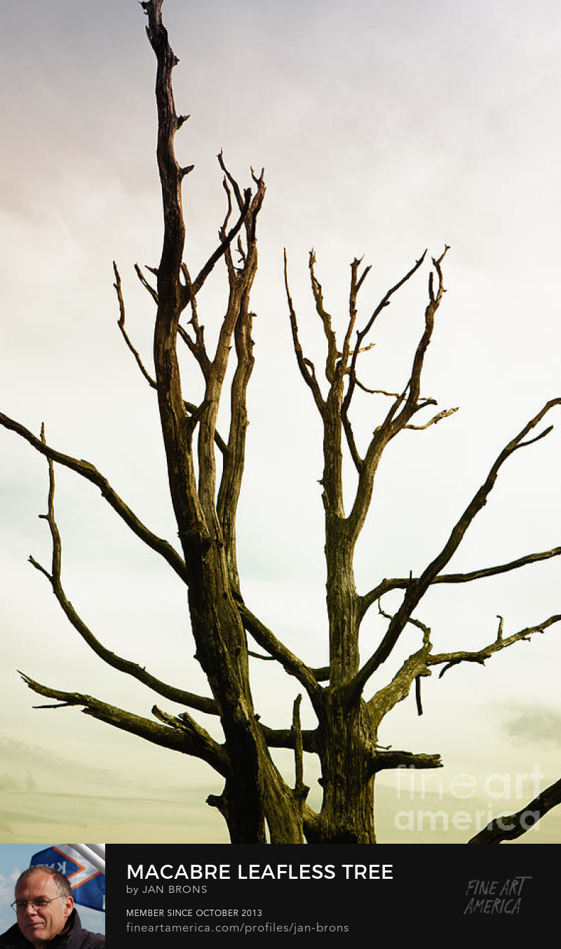 Macabre leafless tree - Photography Prints