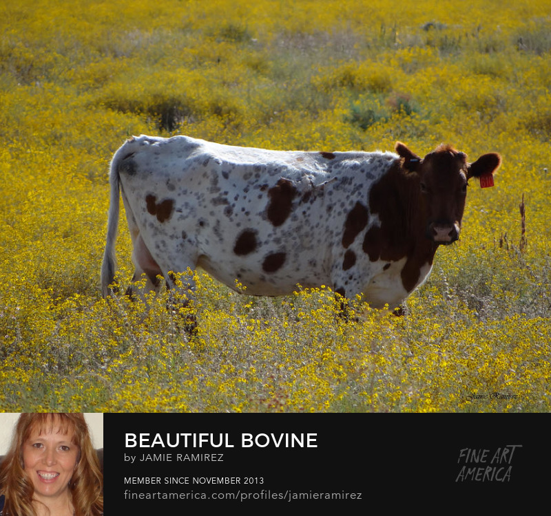 Beautiful Bovine Photography by Jamie Ramirez