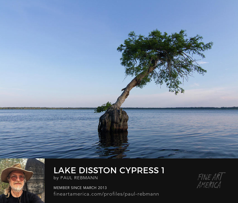 View online purchase options for Lake Disston Cypress #1 by Paul Rebmann