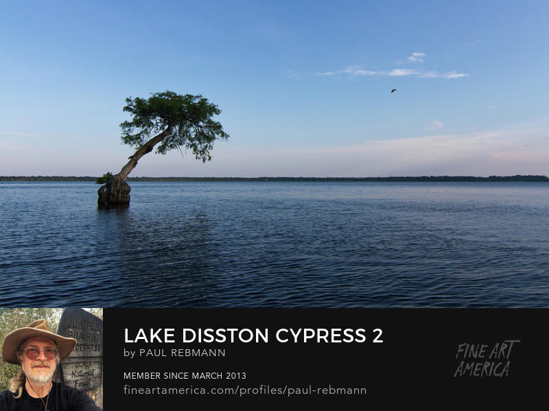 View online purchase options for Lake Disston Cypress #2 by Paul Rebmann