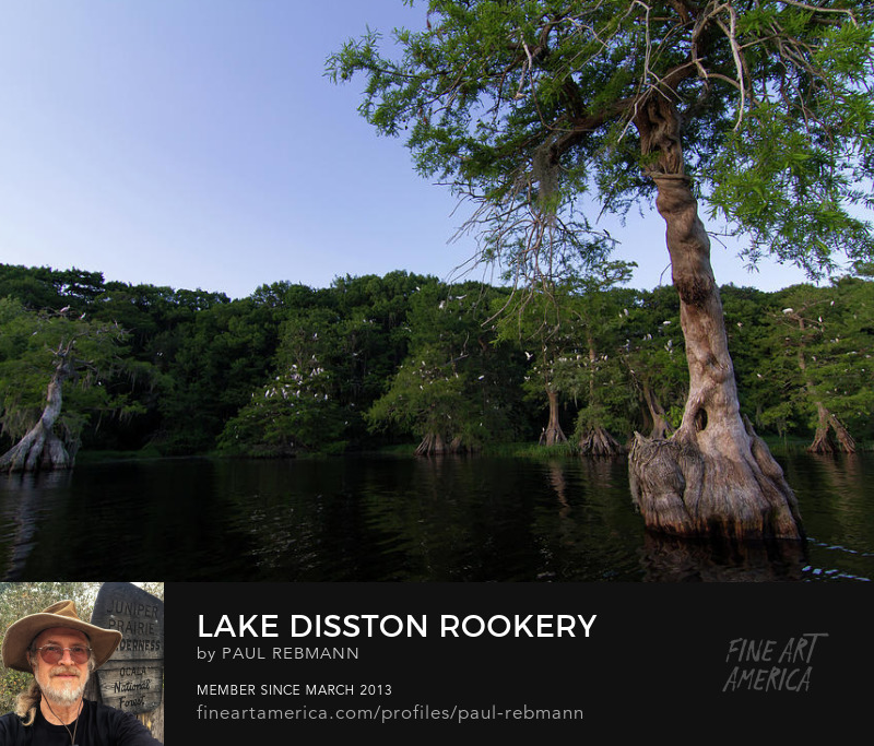Online purchase options for Lake Disston Rookery by Paul Rebmann