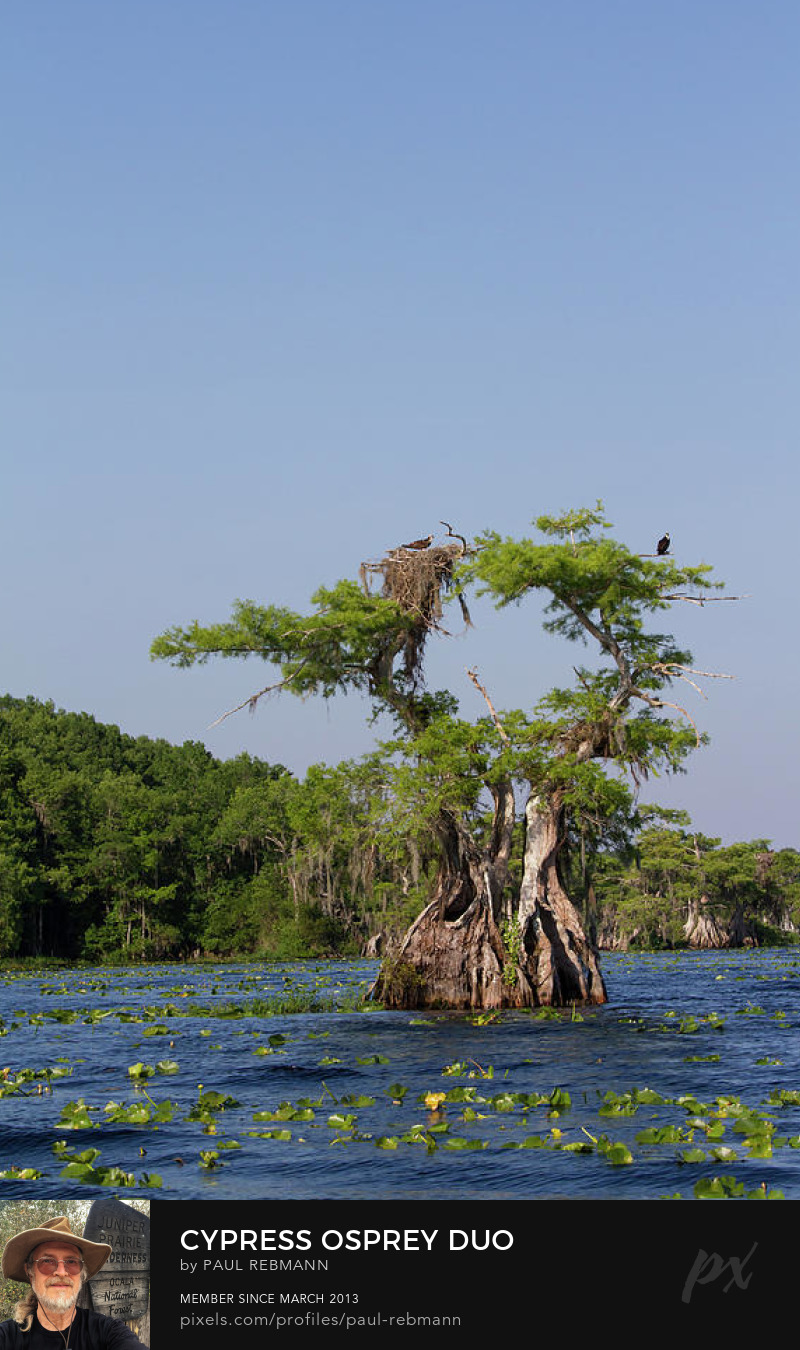 View online purchase options for Osprey Cypress Duo by Paul Rebmann