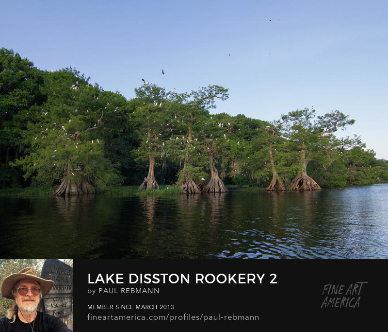Online purchase options for Lake Disston Rookery #2 by Paul Rebmann