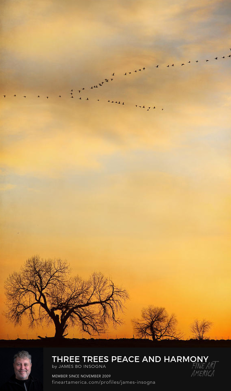 Peace And Harmony Three Trees And Geese In A V Formation Photography Prints