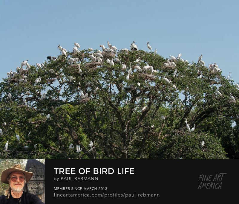 View online purchase options for Tree of Bird Life by Paul Rebmann