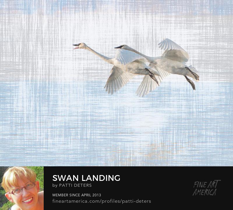 ©patti-deters.pixels.com swans flight winter