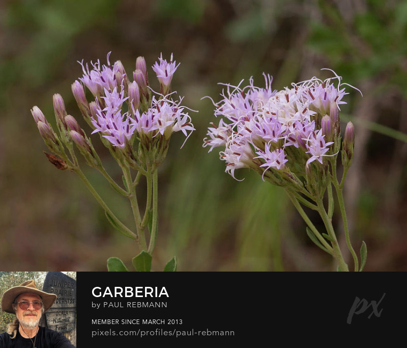 View online purchase options for Garberia by Paul Rebmann