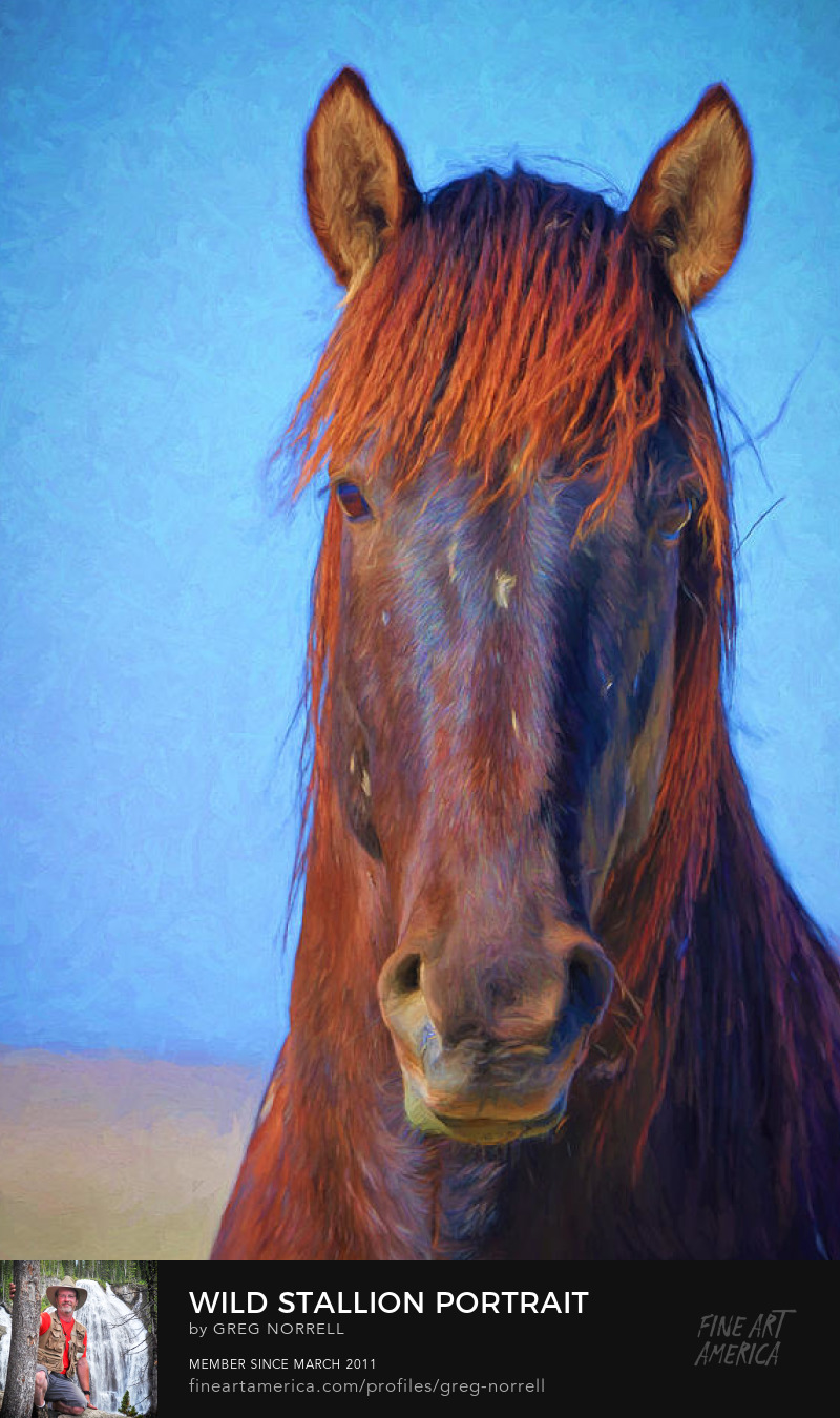 Impressionist portrait of a wild stallion