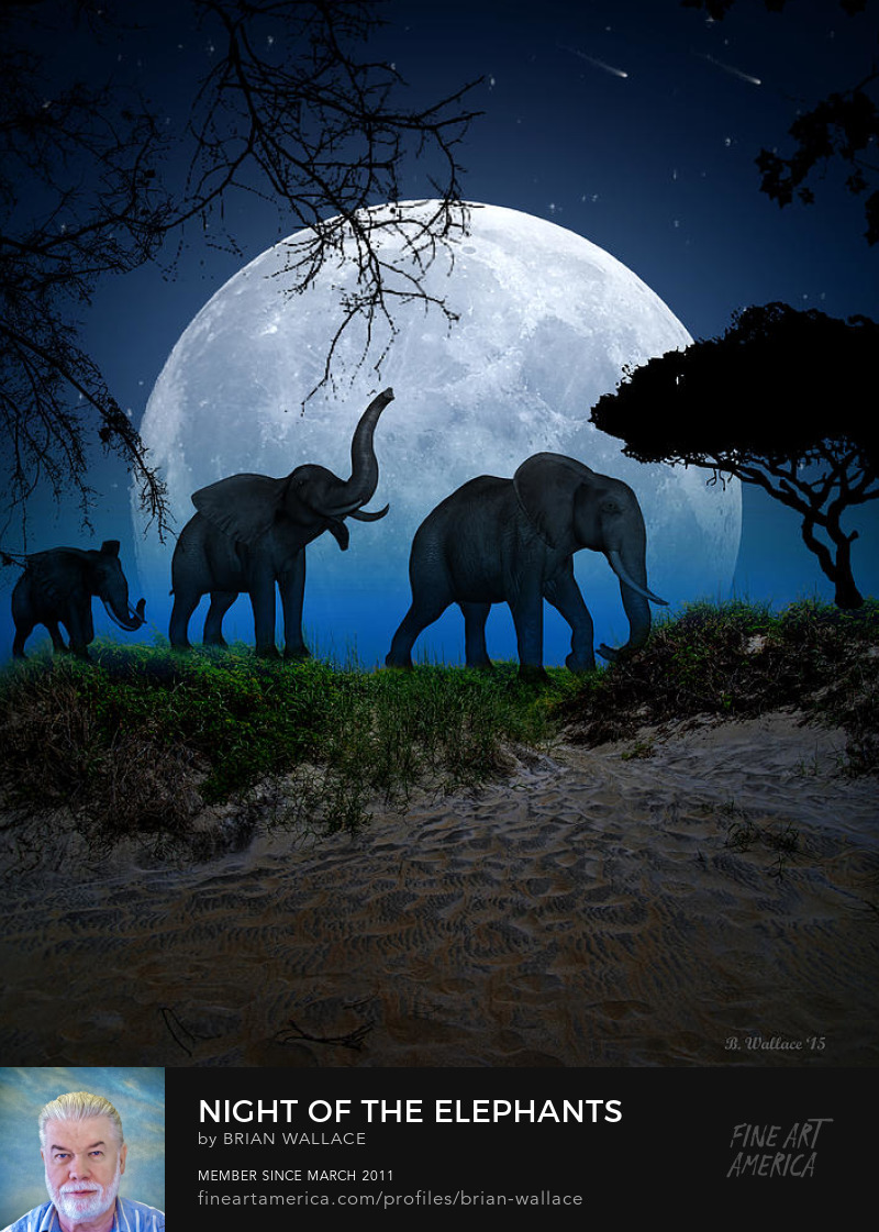 Night Of The Elephants by Brian Wallace