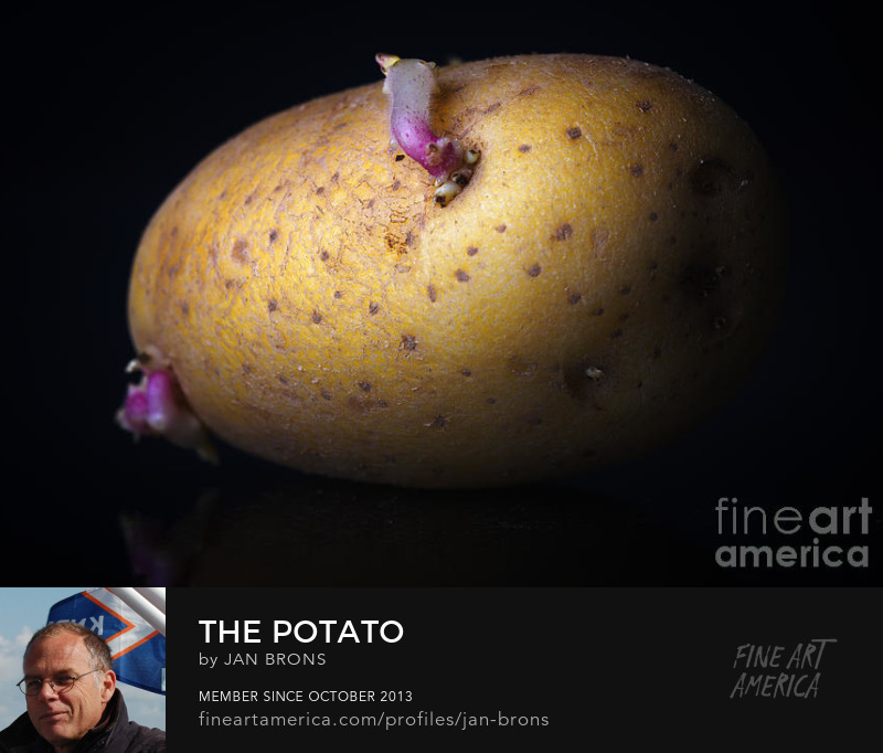 The Potato - Photography Prints