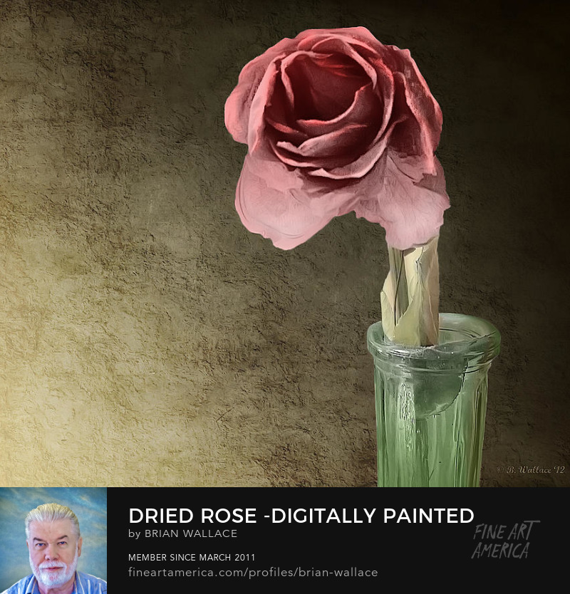 Dried Rose - Digitally Painted by Brian Wallace