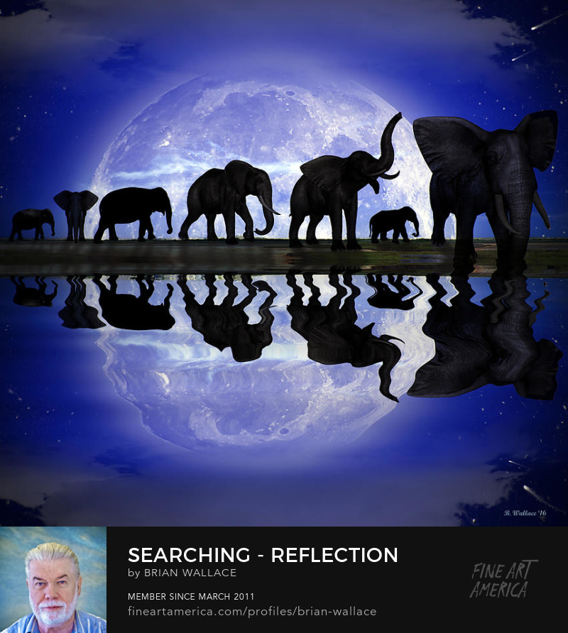 Searching Reflection by Brian Wallace
