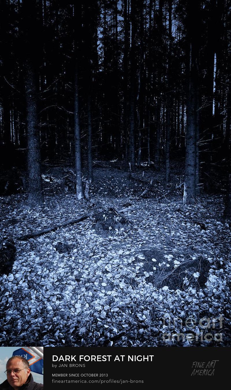 Dark forest at night - Art Online