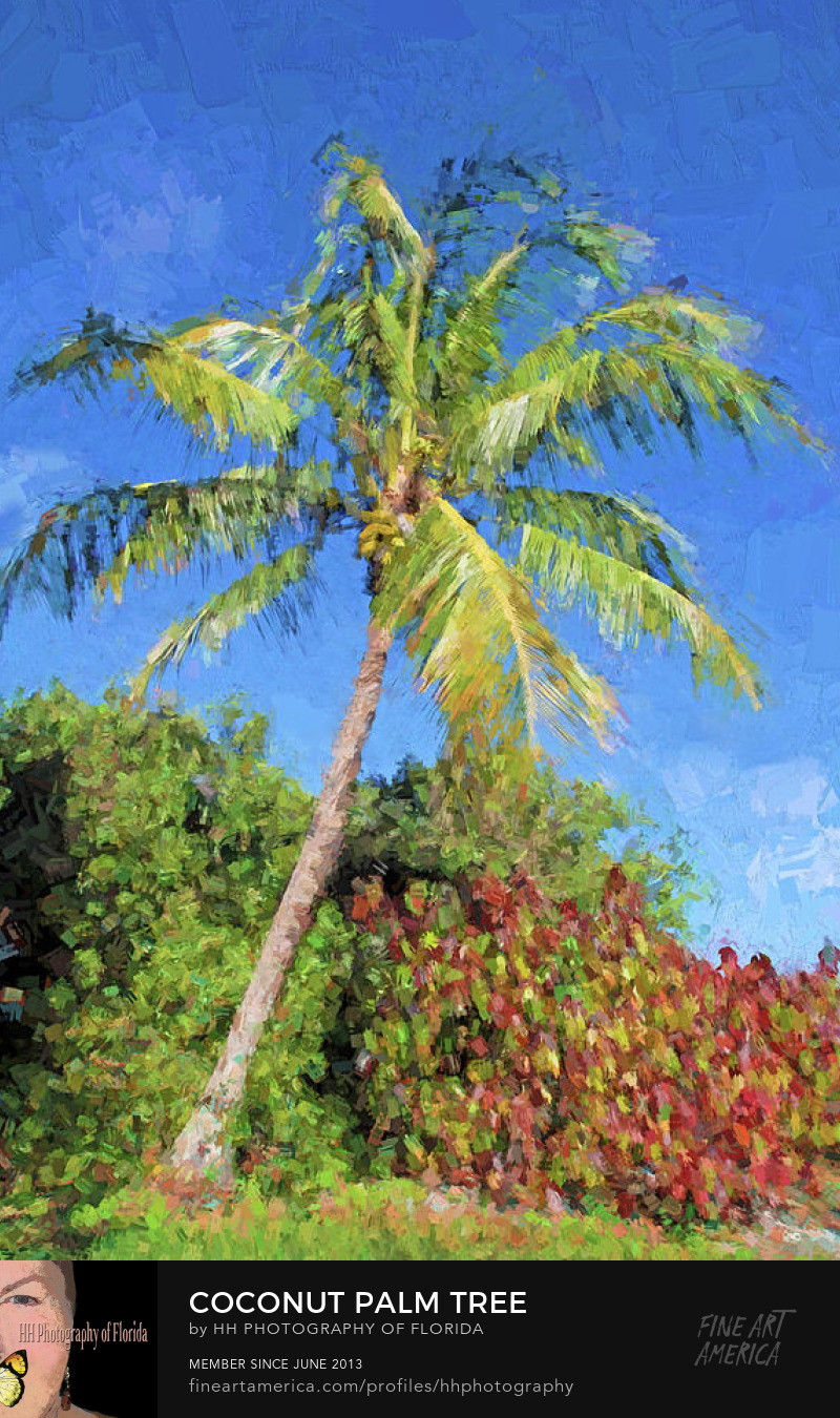 a digitally painted single coconut florida palm tree