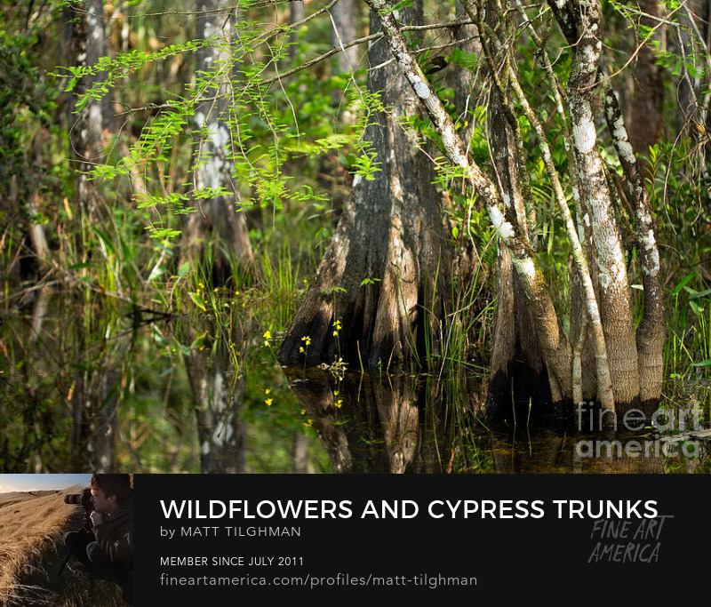 Florida Everglades Swamp Art Online