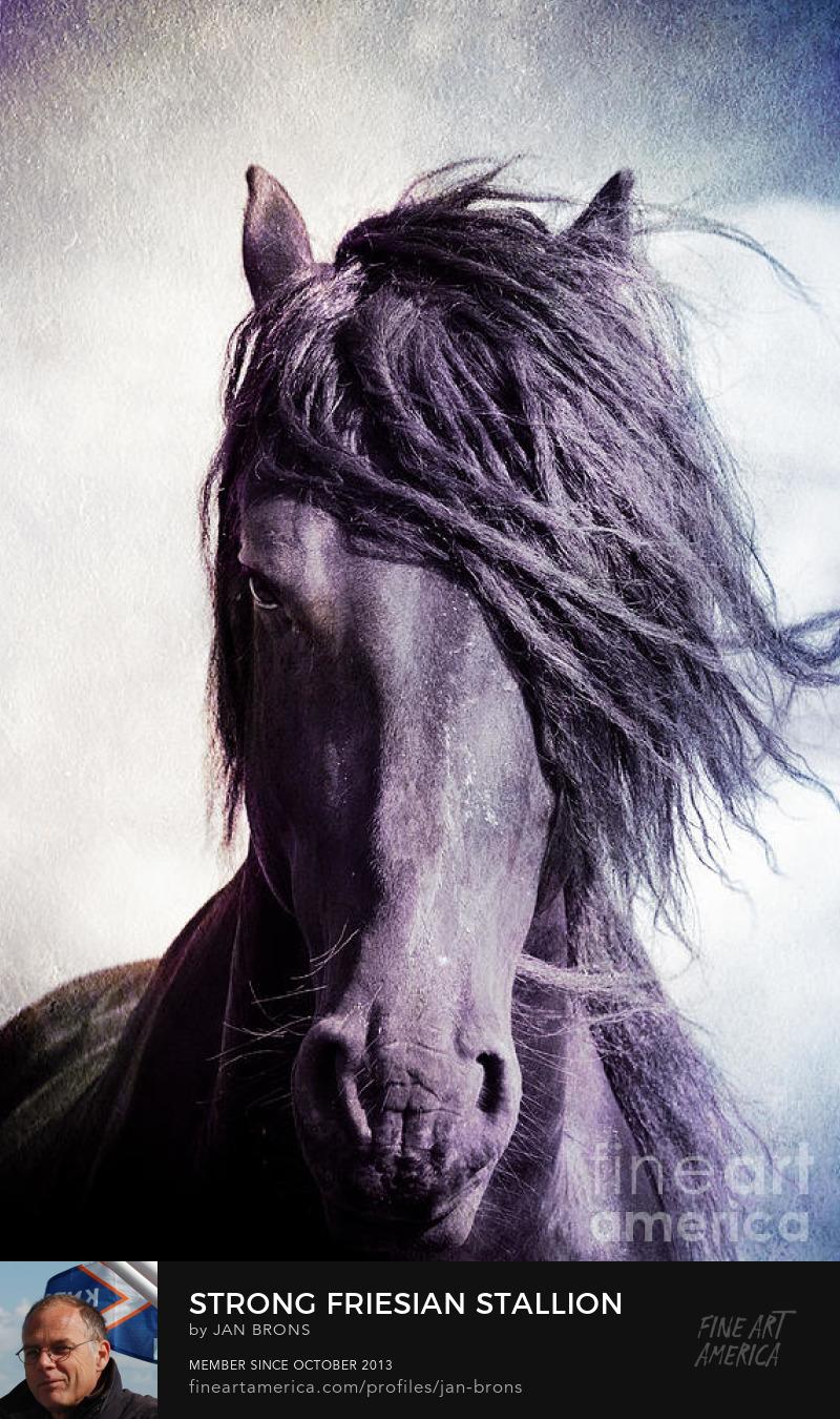 Strong Friesian Stallion - Art Online