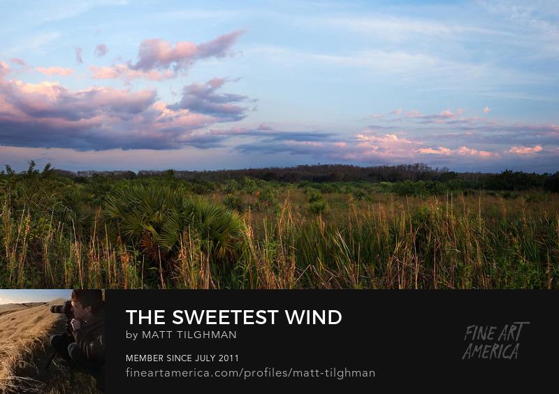 Florida Everglades Sunset Art Prints