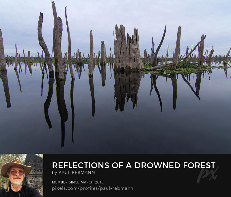 View online purchase options for Reflections Of A Drowned Forest by Paul Rebmann
