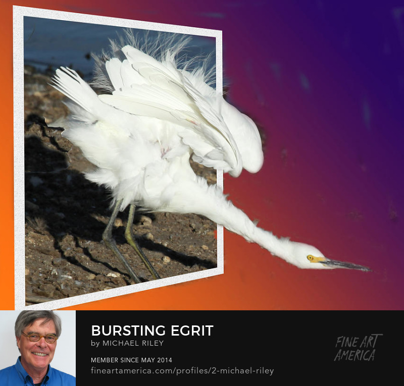 Bursting Egrit by Michael Riley