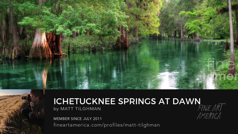 Ichetucknee Springs Florida Art Online