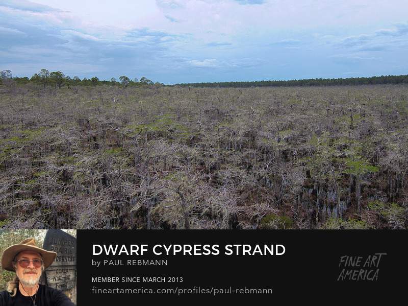 Dwarf Cypress Strand by Paul Rebmann