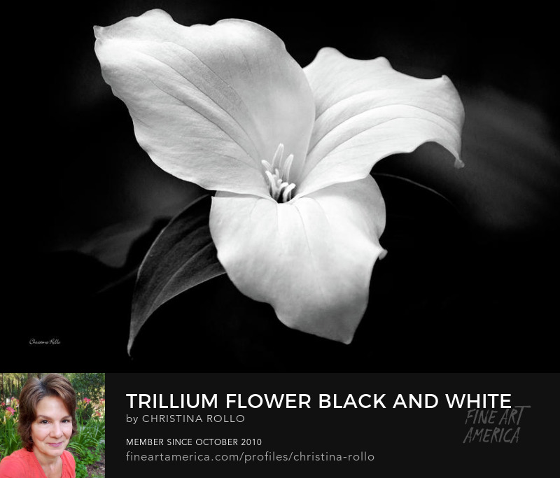 Trillium Flower Black and White Canvas Art for Sale