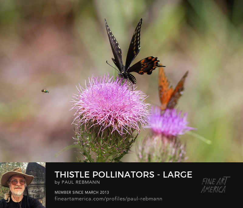View online purchase options for Thistle Pollinators - Large and Small by Paul Rebmann