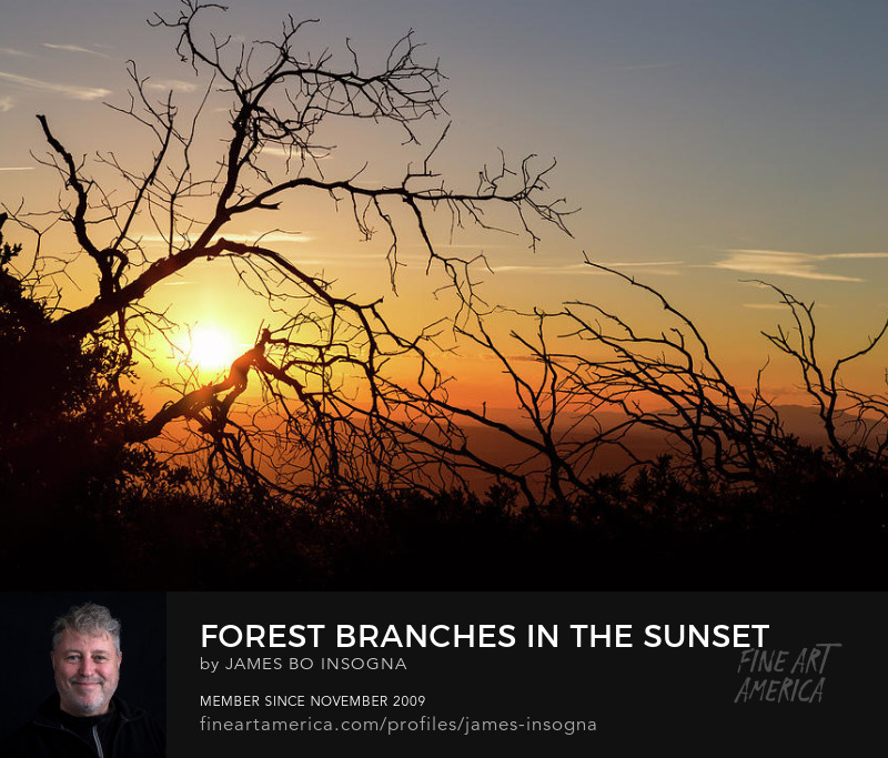 Forest Branches In The Sunset Light Photography Prints