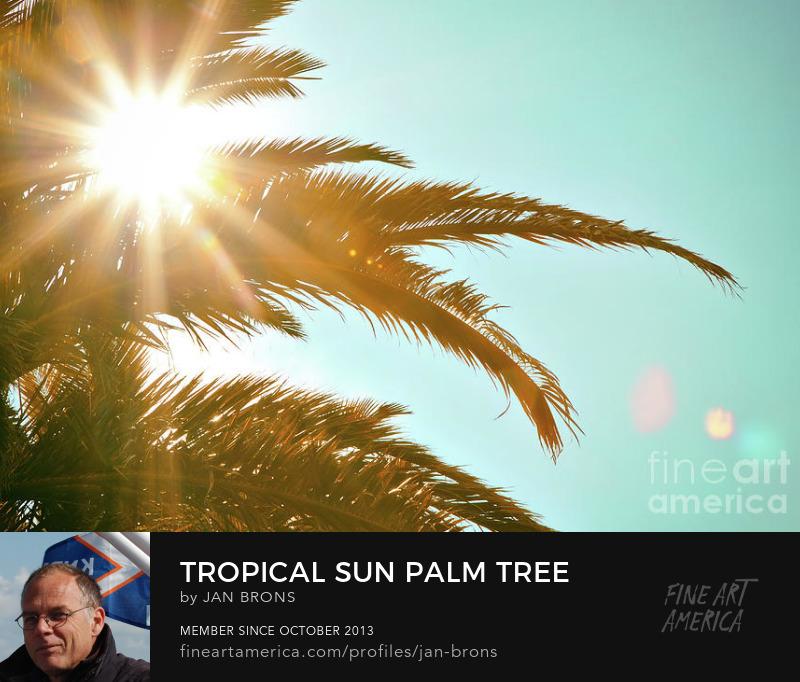 Tropical Sun Palm Tree - Art Print