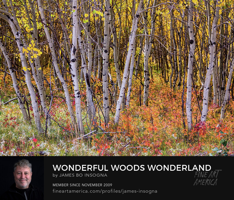Colorful Woods Wonderland Art Prints