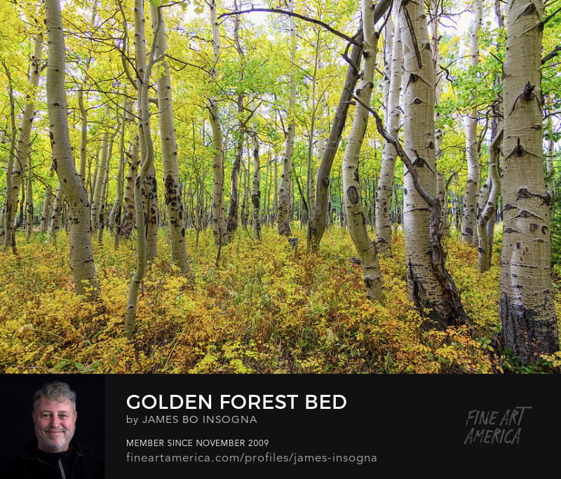 Golden Forest Nature Landscape Art Prints